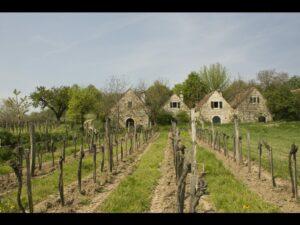 Burgenland - Weinbauer - Eine lange Tradition