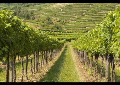Niederösterreich - Weinberge in der Wachau