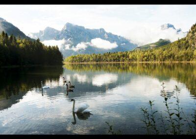 Oberösterreich - Almsee mit Schwänen