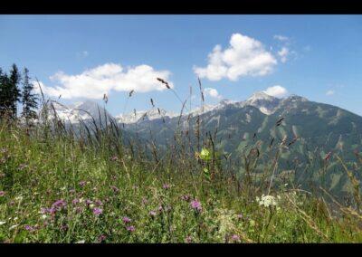 Oberösterreich - Hinterstoder - Sommer auf der Höss in Hinterstoder