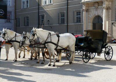 Sbg - Pferdekutsche mit Schimmeln