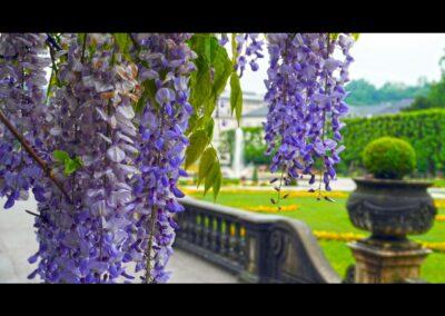 Sbg - Salzburg - Garten vom Schloss Mirabell 4