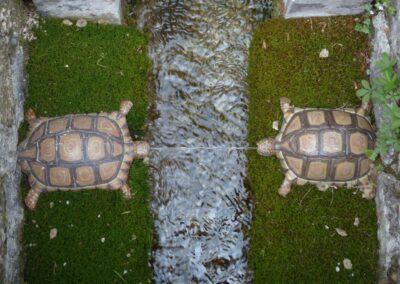 Sbg - Salzburg - Schildkröten im Schlosspark Hellbrunn