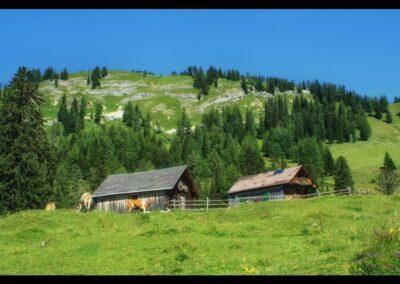 Stmk - Almwirtschaft in der Steiermark