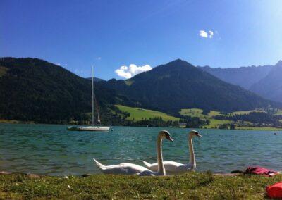 Tirol - 2 Schwäne im Walchsee