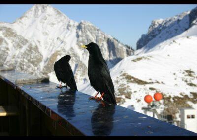 Tirol - Füssener Jöchle im Tannheimer Tal