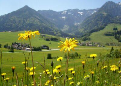 Tirol - Landschaft im Kaisergebirge