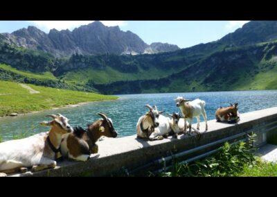 Tirol - Traualpsee im Gemeindegebiet von Tannheim 2