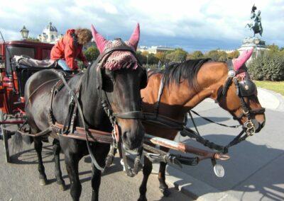 Bild zeigt: Wien - Pferdekutsche vor der Hofburg