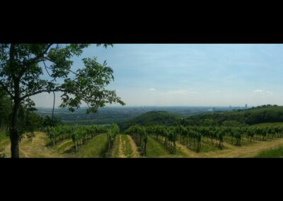 Bild zeigt: Wien - Weingärten vom Kahlenberg